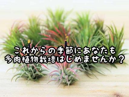 【ガーデニング】これからの季節にイキイキと多肉植物を育てる方法を伝授します
