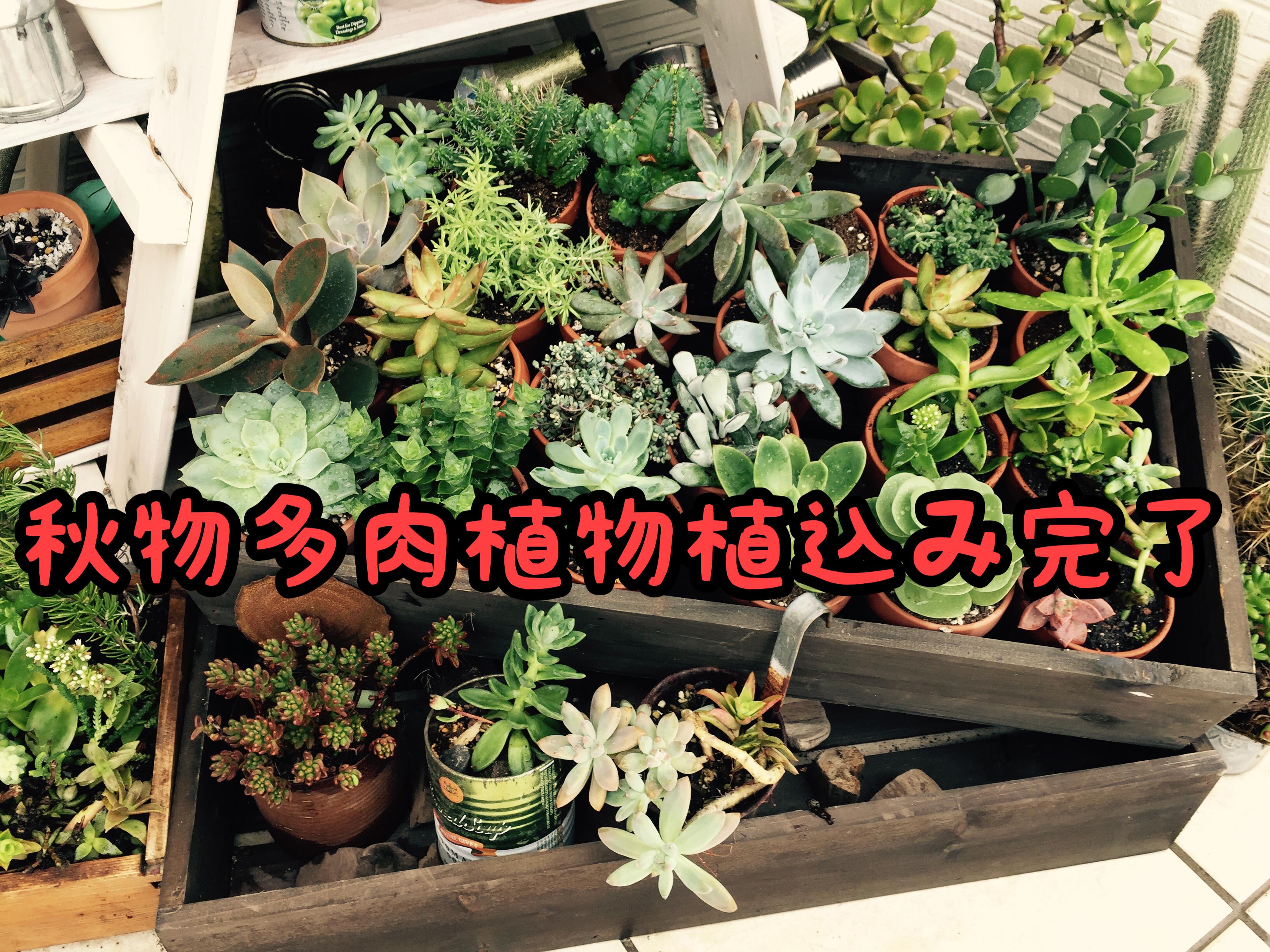 【リニューアル】先日仕入れた多肉植物を植込みました。Age玄関が統一感アップ!