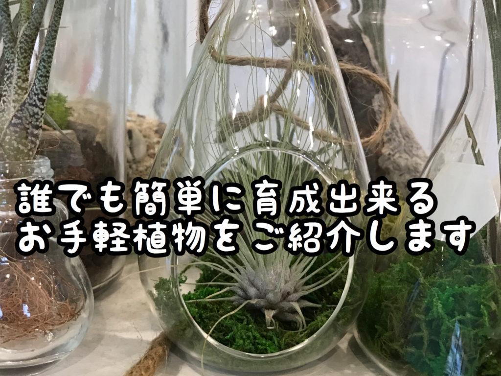 【植物】日々増殖中。当店自慢のかわいいエアープランツたち