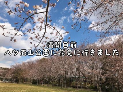 【春本番】子供を連れて地元の八ツ面山にお花見に行ってきました