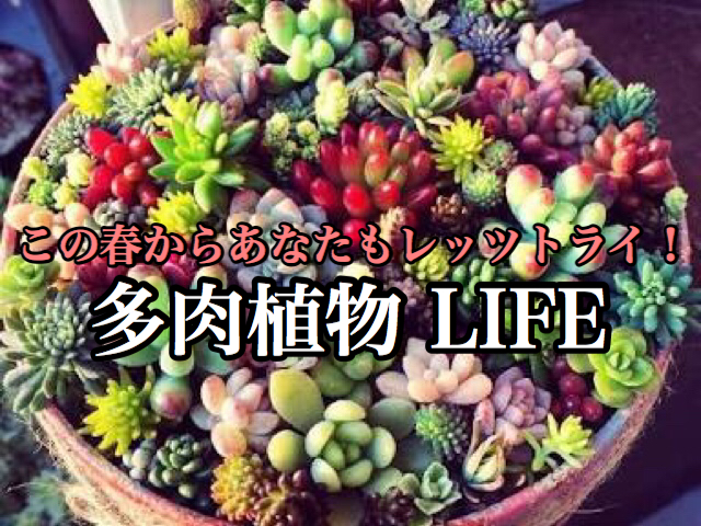 【趣味】暖かくなってきたことだし始めてみよう!季節で楽しむ多肉植物生活