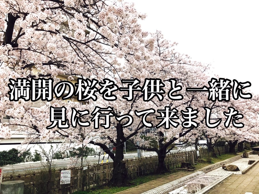 【春】近所に散歩がてら満開の桜を子どもたちと見に行ってきました