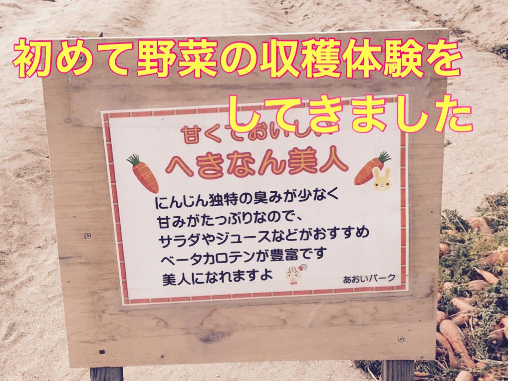 碧南のアオイパークでどっさり新鮮野菜の収穫をしてきました