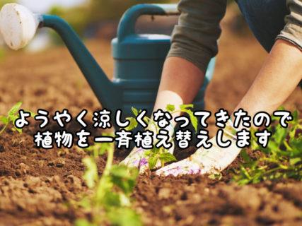 【リニューアル】秋の植物の植え替えをするのにやっと良い季節になりました