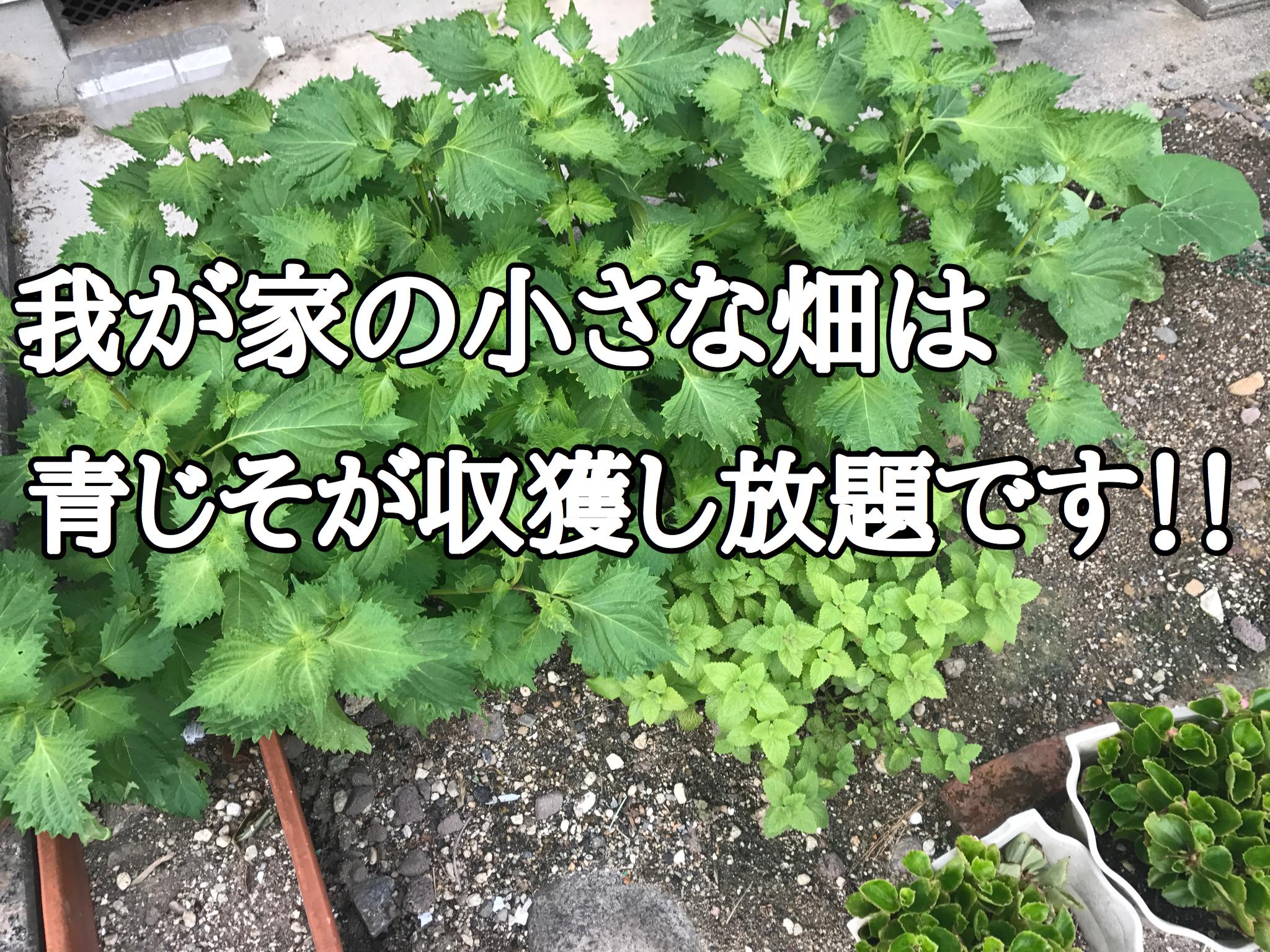 我が家の家庭菜園の今をお伝えします