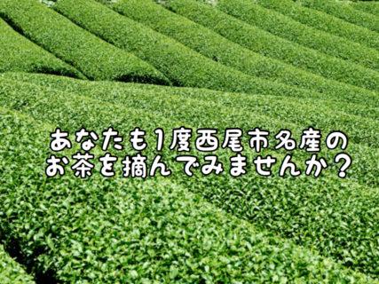 【名産品】間も無く西尾市内全域のお茶摘みが始まります