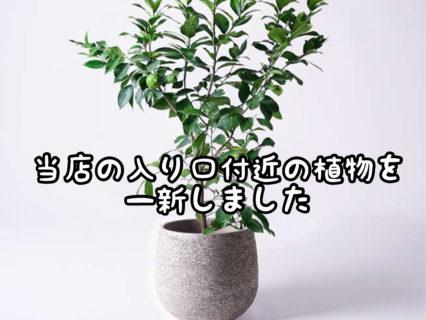 【良香】これ何の木だ?ご来店時に実際近くで匂いを嗅いでみてください