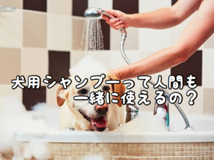 【ケアアイテム】ペット用シャンプーを人間が使ったらどうなるの?その逆は?