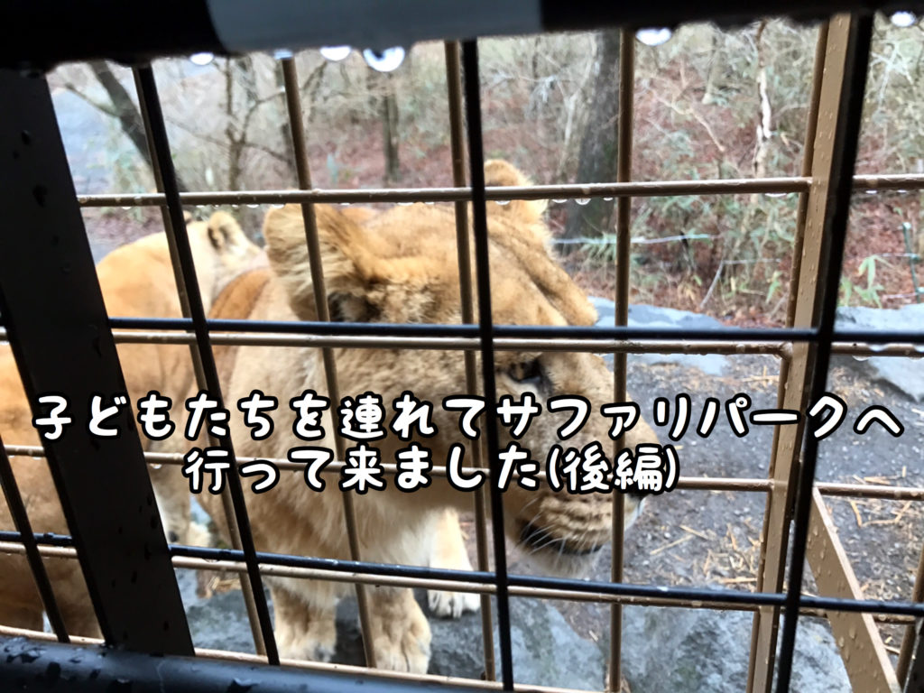 【旅行】ホントにホントにライオンだ!!!富士サファリパークへ行ってきました(後編)