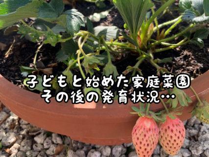 """【観察】こどもと一緒に始めた""""家庭菜園""""その後の育成状況・・・"""