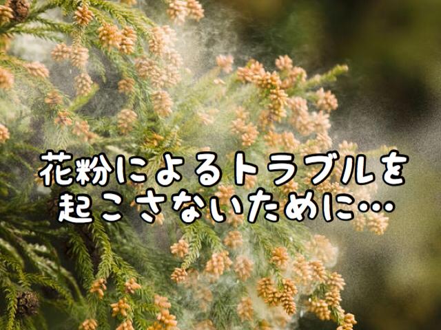 【花粉】アレルギー症状を引き起こさないようにキチンと夜行いましょう