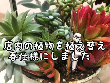 【リニューアル】店内の植物たちを一斉に植え替えました