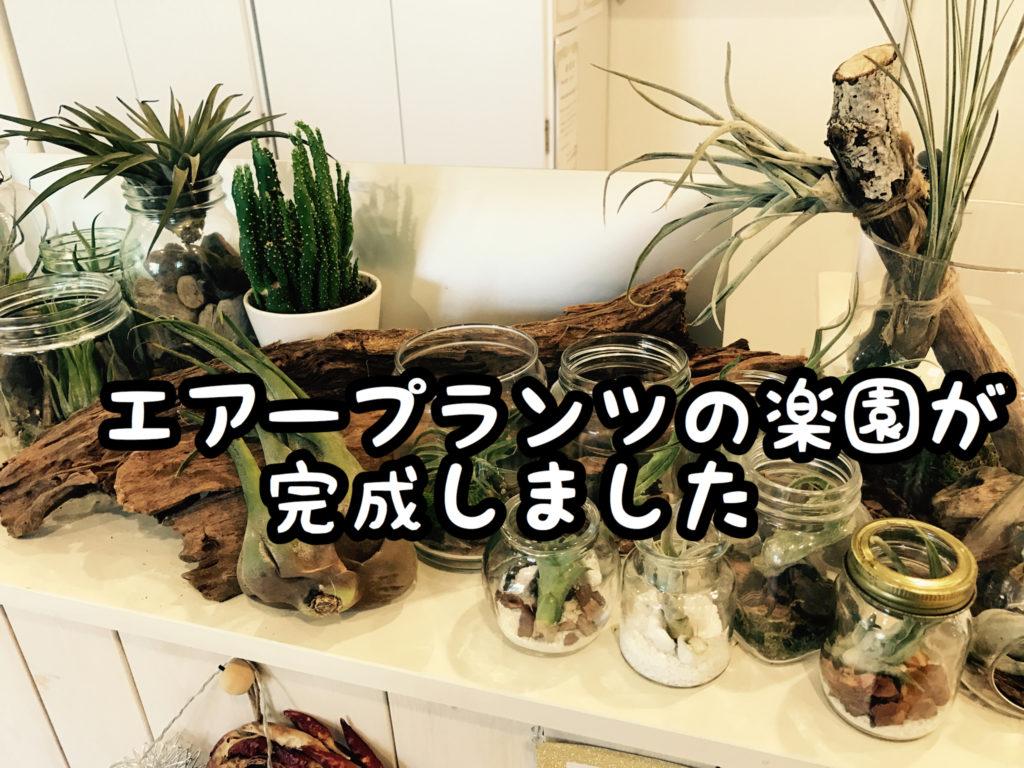 【植物】久々に春に向けて受付のディスプレーをイメチェンしました!