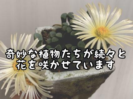 【神秘】奇怪植物たちが次々に開花し始めました