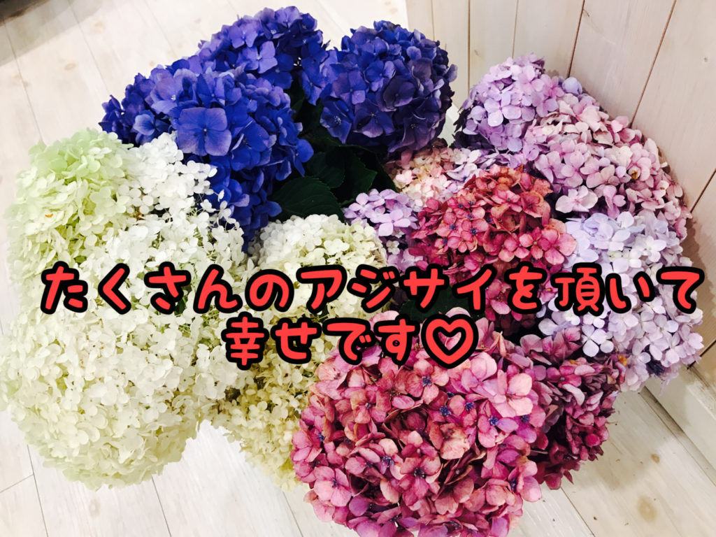 【感謝】今が見頃!花の中で1番大好きなアジサイをたくさん頂きました!