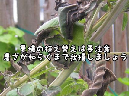 【植栽】花や観葉植物の植え替えはこの時期はちょっと待って!もう少し我慢しましょう