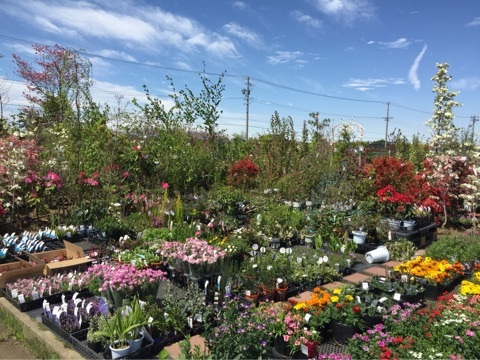 植物の宝庫☆いこいの農園