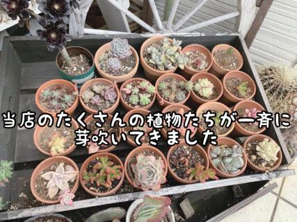 【成長】店外の植物たちが一斉に芽吹いてきました。ご来店時に是非ご覧ください
