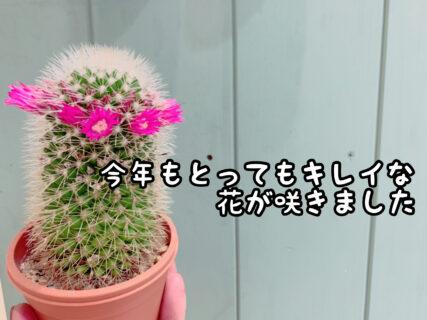 【可憐】今年もたくさんの花を付けてくれました。午前中が見頃です!