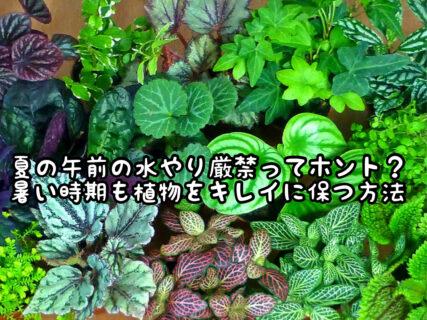 """【ガーデニング】夏場は朝植物に水やりは""""厳禁""""ってホント!?どうして!?"""